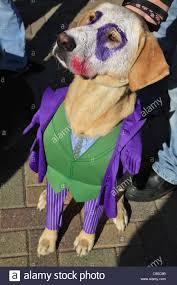 dog dressed up stock photos u0026 dog dressed up stock images alamy