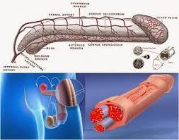 vimax canada obat pembesar penis agen obat vimax