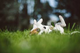 Burying Your Dog In The Backyard Legality Worms In Dogs Here U0027s Everything That Dog Owners Need To Know