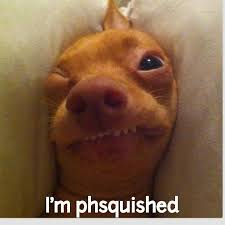 Tuna The Dog Meme - phteven calendar google search hardy har har pinterest