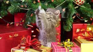 Decoration Under Christmas Tree by Little Grey Kitten Playing With Christmas Decorations Under A