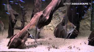 Aquascape Designs For Aquariums Aquascaping Aquarium Ideas From Zoobotanica 2012 Part 5 Youtube