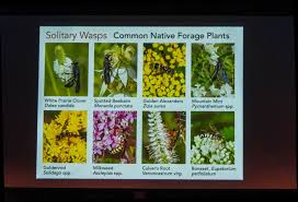 plants for native bees the buzz on bees river city wild ones native plants natural