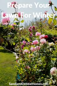 how to prepare lawn for winter in southern california sandi and