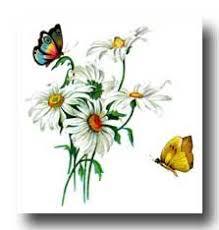 best 25 drawings of butterflies ideas on pinterest butterfly