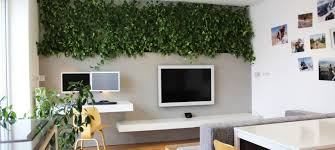 plants for office office plants living walls san jose indoor maintenance service