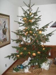 noble fir christmas tree noble fir christmas tree ne wall