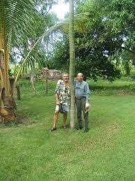mexican fern tree ola brisa gardens