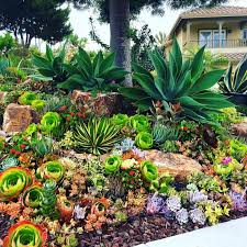 Succulent Gardens Ideas 1250 Best Endless Succulent Ideas Images On Pinterest Boyfriends