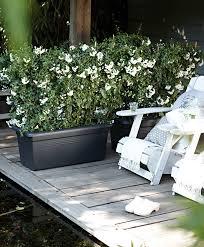 buy elho green basics garden xxl black bakker com