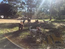 Creature Comforts Pet Sitting Creature Comforts Pet Sitting And Dog Walking Sitting Gumtree