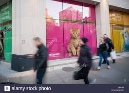 petsmart retail store stock photos u0026 petsmart retail store stock