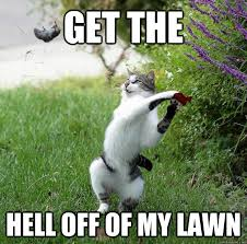 Get Off My Lawn Meme - get the hell off of my lawn get off of my lawn cat quickmeme