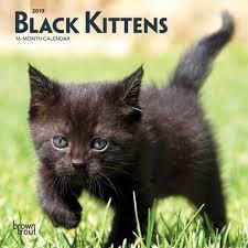 Grumpy Cat Mini Wall Calendar - kittens 2019 7 x 7 inch monthly mini wall calendar animals cats kittens