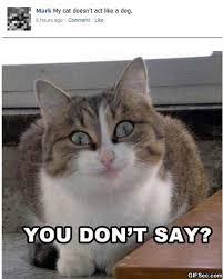 Best Memes 2014 - best memes 2014 google search memealicous pinterest memes