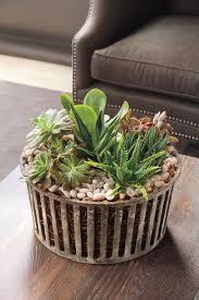 in door plant put in pot vide best indoor houseplants southern living
