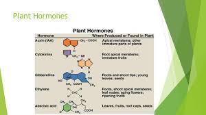 plant hormones chemical control of description of lawyer