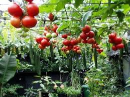 35 best gardening hydroponics images on pinterest hydroponics