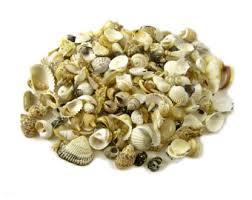 Assorted Seashells Natural Sea Shell Grab Bag Assorted Small Sea Shells From