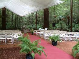 redwood forest wedding venue redwoods favourite wedding venue the redwoods whakarewarewa