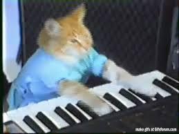 Keyboard Cat Meme - keyboard cat gif on imgur