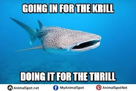 Whale Meme - whale memes