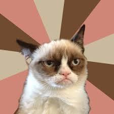 New Grumpy Cat Meme - new grumpy cat meme generator