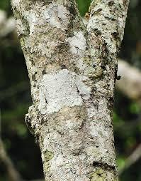 10 fantastic animals that use bark camouflage