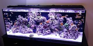 current usa orbit marine aquarium led light orbit marine pro in stock reef2reef saltwater and reef aquarium