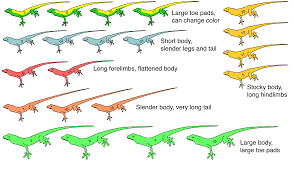 2011 anole annals page 15