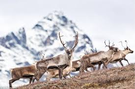 Alaska how long does it take for mail to travel images Photographer tim plowden spends month capturing alaska 39 s wildlife JPG