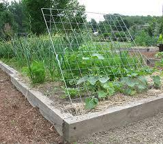 Make Your Own Cucumber Trellis Cucumber Trellis Cucumber Trellis Gardens And Garden Ideas