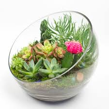 enjoy indoor gardening with terrariums tbr news media
