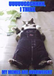 My Meme Maker - fat cat memes imgflip