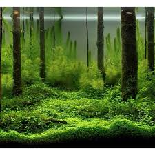Aquascape Designs For Aquariums 144 Best Aquascaping And Planted Tanks Images On Pinterest