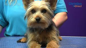 yorkie hair cut chart grooming guide yorkshire terrier puppy trim pro groomer youtube