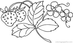 strawberry plant coloring pages eliolera com