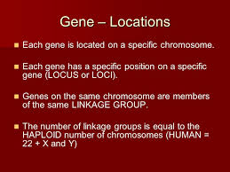genes u2013 basics a gene is an inherited instruction consisting of a