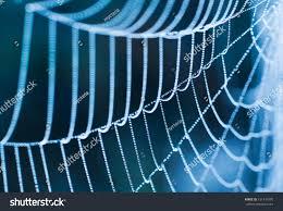 spider web transparent background spider web close up stock photo 131341070 shutterstock