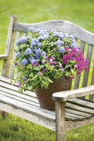 decoration avec des pots en terre cuite fleurs de jardin d u0027été u2013 idées d u0027arrangements floraux en pots