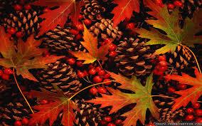 best 25 fall leaves wallpaper ideas fall wallpaper 736x552