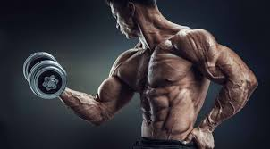 arm exercises the 7 best arms of all fitness
