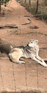 Colorado Wildlife Tours images Colorado wolf and wildlife center divide 2018 all you need to jpg