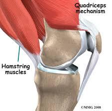 Knee Anatomy Pics Quadriceps Tendonitis Tendon Pain Houston Methodist