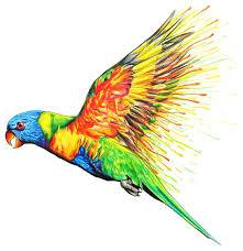amazon com chameleon color tones pencils 50 color