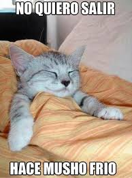 Sleepy Kitty Meme - jaidefinichon terrible de hd eu pinterest