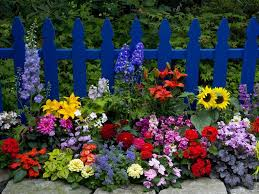 garden gate flowers beautiful flower garden summer flowers garden bloom yard fence