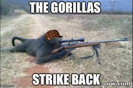 Gorilla Warfare Meme - gorilla warfare memes imgflip