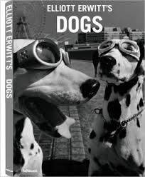 dog coffee table books 73 best coffee table books images on pinterest books gift ideas