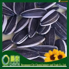 egypt sunflower seeds egypt sunflower seeds suppliers and